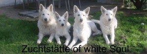 Zuchtstätte of white soul