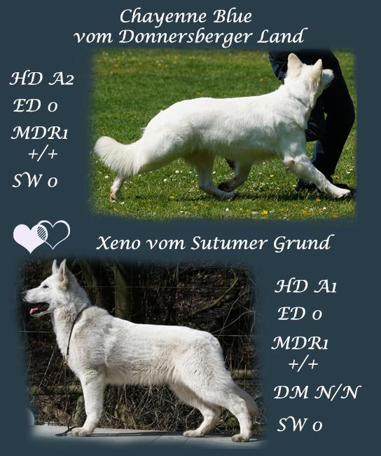 Xeno und Chayenne2