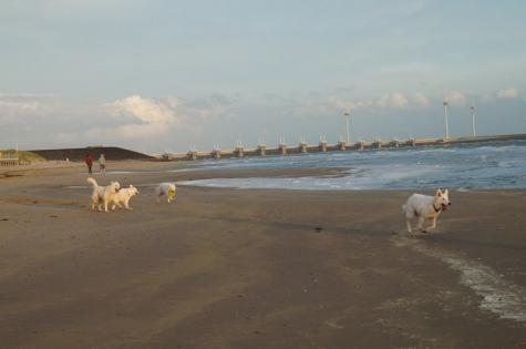 Grevelingenmeer Port Greve Burgh Haamstede